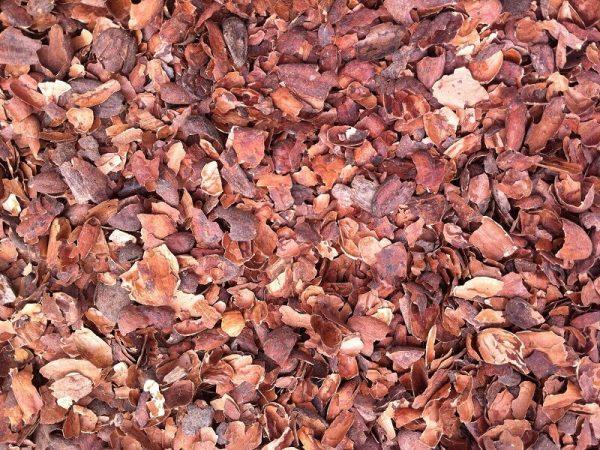 Kakao-Flis